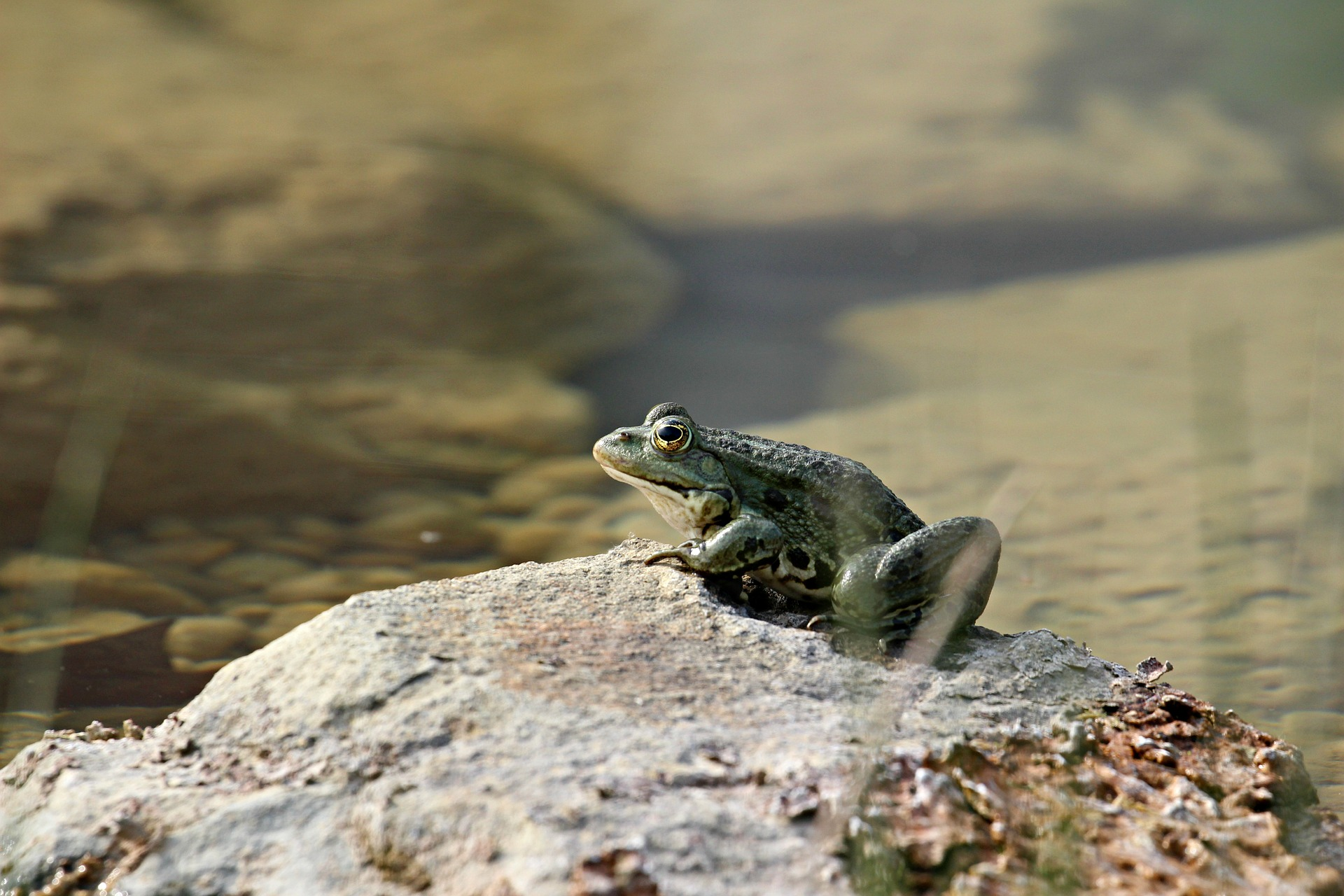 Frog Travel Nature